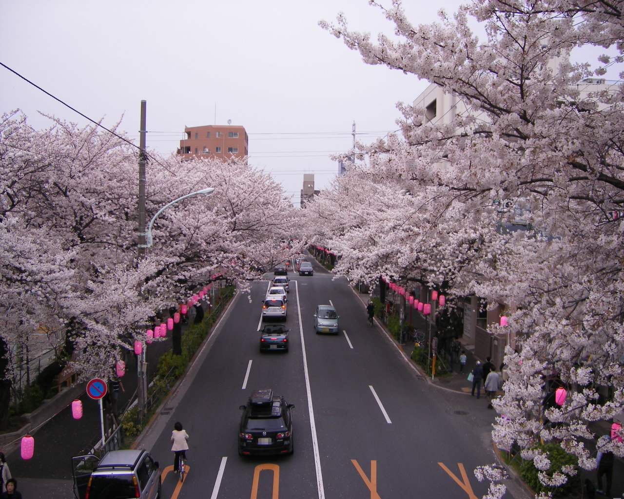 新井小学校前の歩道橋からみた中野通り